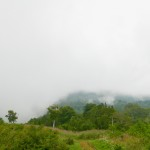 Rural 2019