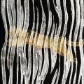 Evitceles - Lioncage LP [Accent Records]